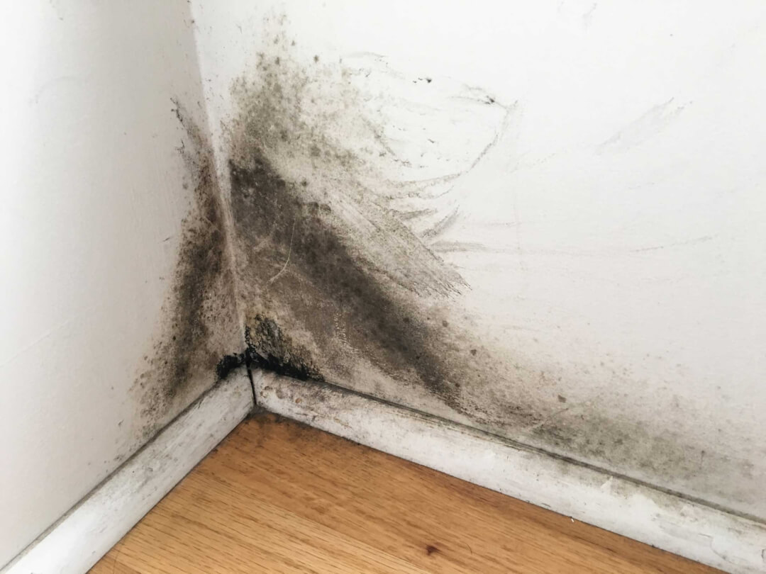 black mold remediation los angeles