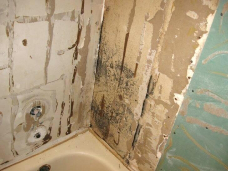 mold remediation mold removal los angeles